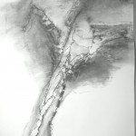 Fusain 2009 -100x 70 cm